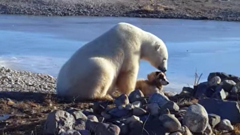 El oso y el perro